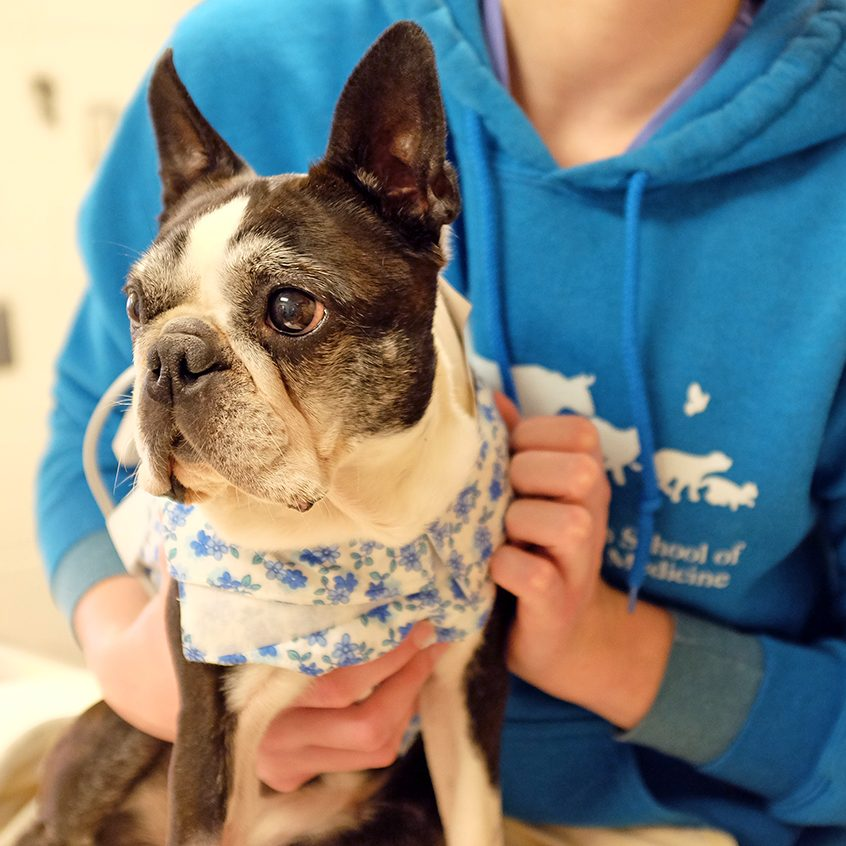 Dog participating in clinical trial