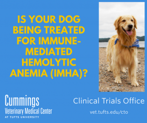Is your dog being treated for immune-related hemolytic anemia (IMHA)?