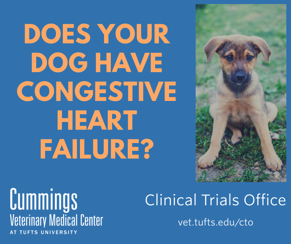 Does your dog have congestive heart failure?
