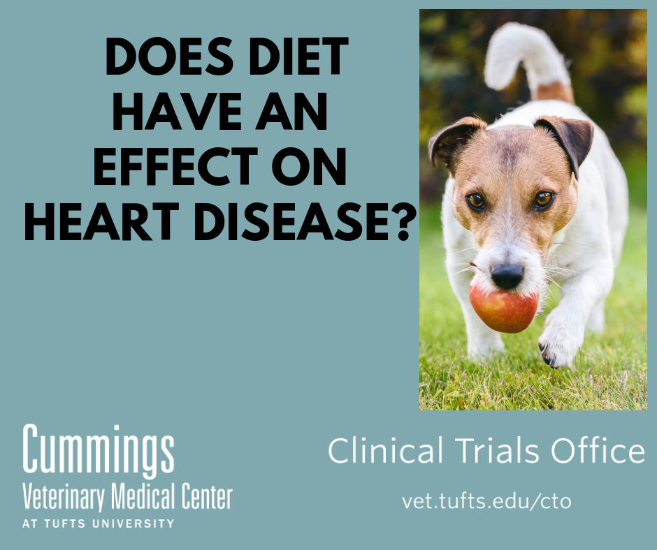 clinical-trial-diet and heart disease