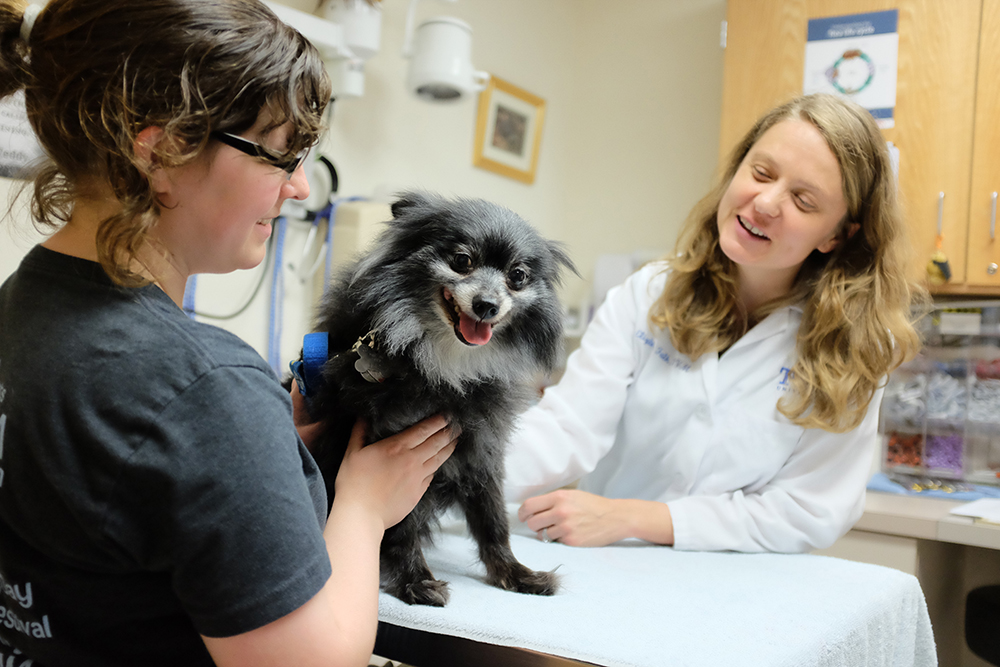 Client with dog being examined for a clinical trial