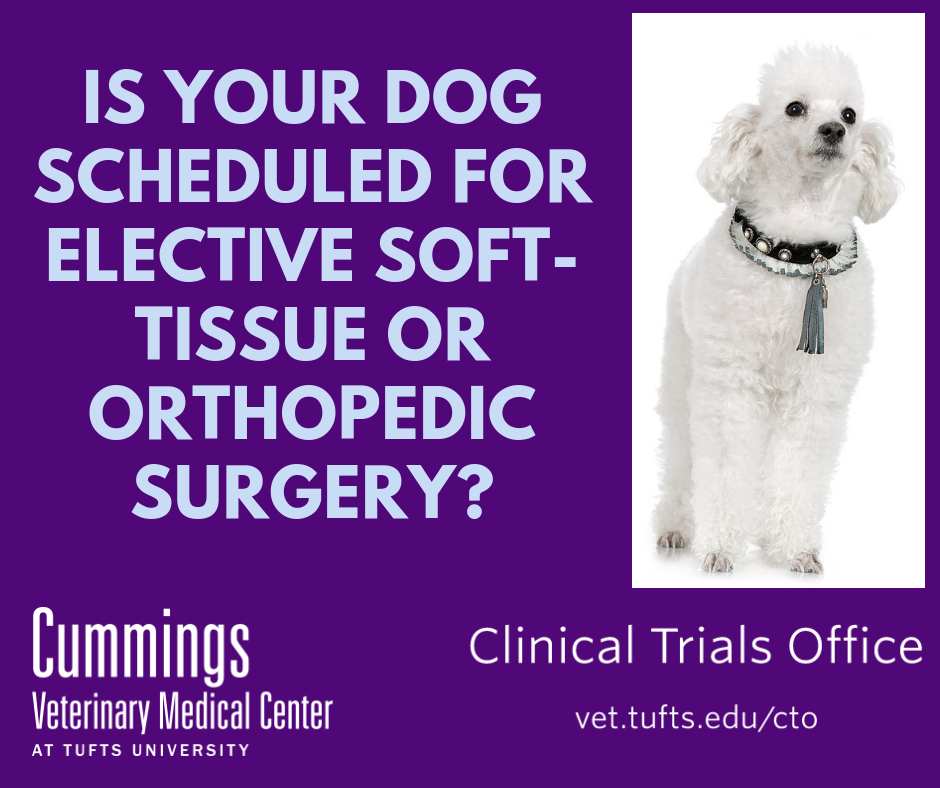 Is your dog scheduled for elective soft-tissue or orthopedic surgery?