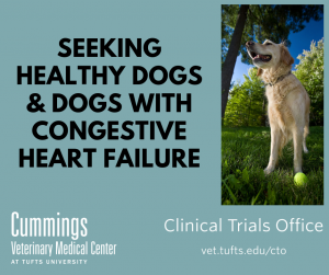 Seeking healthy dogs and dogs with congestive heart failure