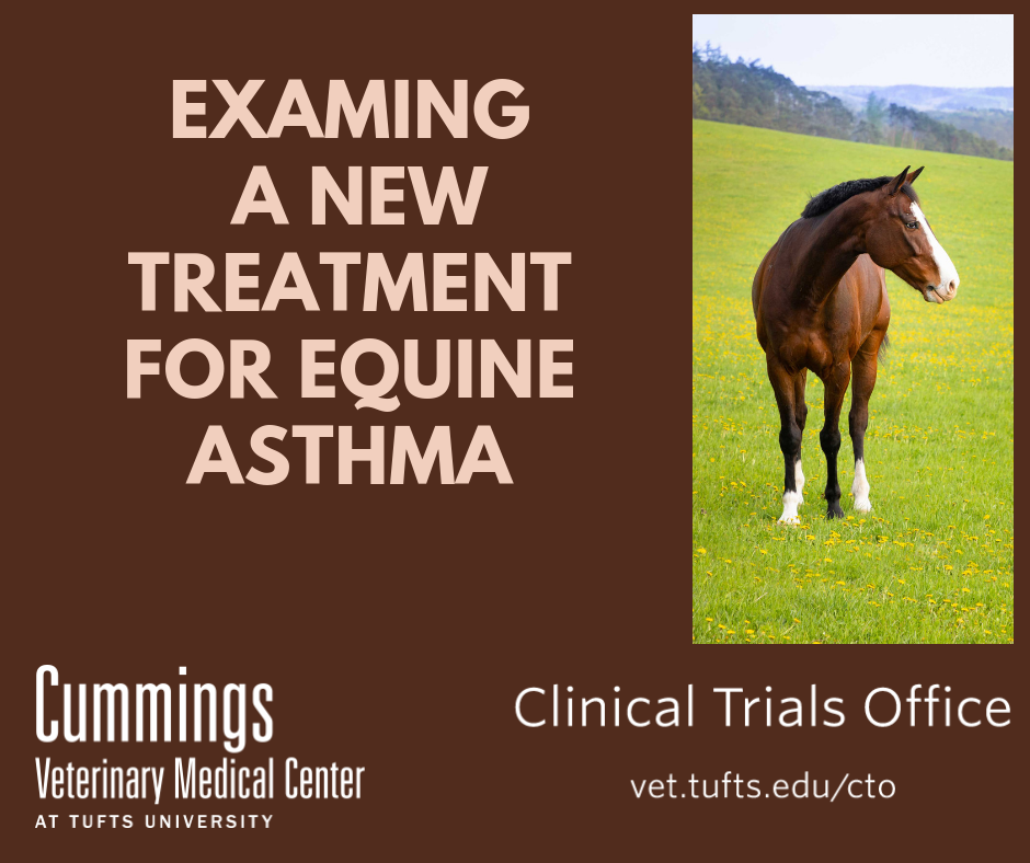 clinical-trial-horses-asthma