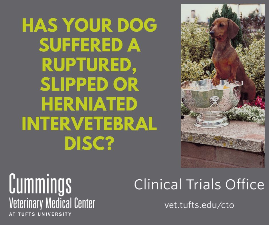 Has your dog suffered a ruptured, slipped or herniated intervertebral disc?